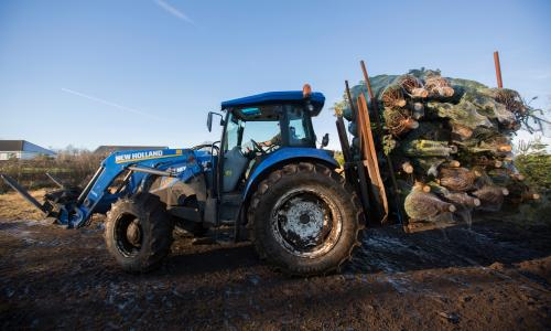 Loading Christmas Trees on the Tractor