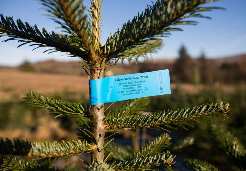 Labelling Christmas Trees on the Farm